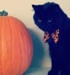 perry pumpkin c D. Schultz