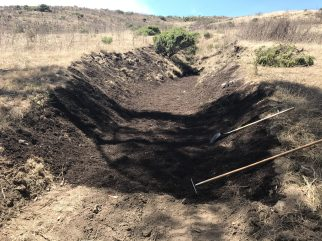 A layer of compost to feed the soil
