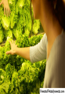 woman shopping for lettuce