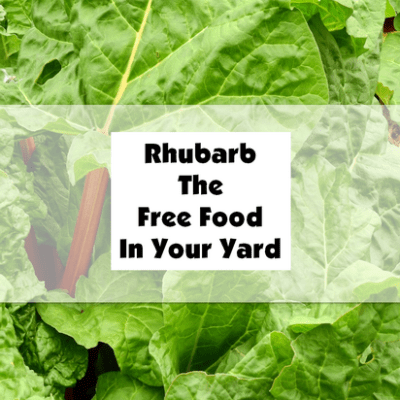 Rhubarb The Free Food In Your Yard