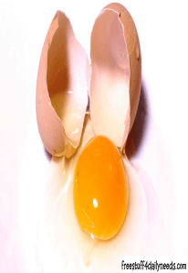egg with egg shell