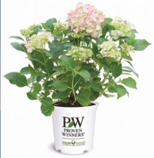 Proven Winners Free 2012 Gardener's Idea Book