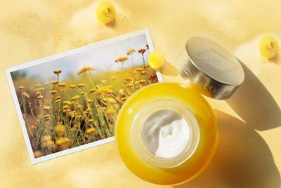 L'Occitane en Provence Anti-Aging The Divine Cream