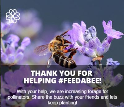 Feed a Bee Free Wildflower Mix Seed Packet