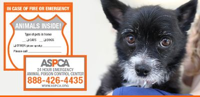 ASPCA Free Pet Safety Pack - US