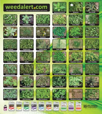 Weed Alert Free Garden Weed ID Poster - Canada and US