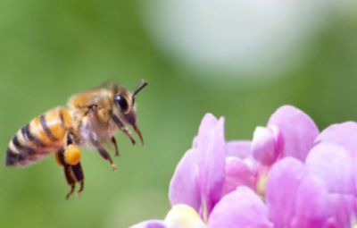 Bees Matter Free Flower Seeds to Attract Bees - Canada