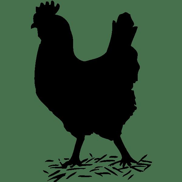 Chicken Silhouette Svg : chicken, silhouette, Chicken, Silhouette, Vector, Illustration