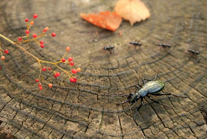 yuki-tsunoda-glass-insects-10