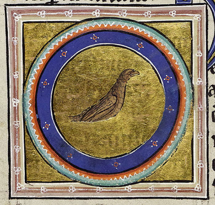 Portrait of the blackbird in a roundel. It is painted brown either in ignorance of the text or because it is a female bird.