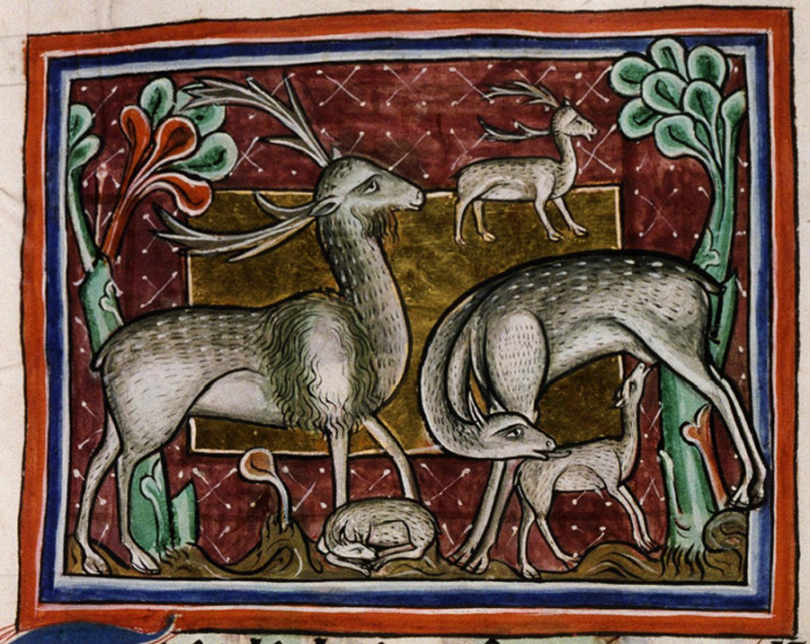 Bodleian Library, MS. Bodley 764, Folio 20r. Two stags with a doe and fawns.
