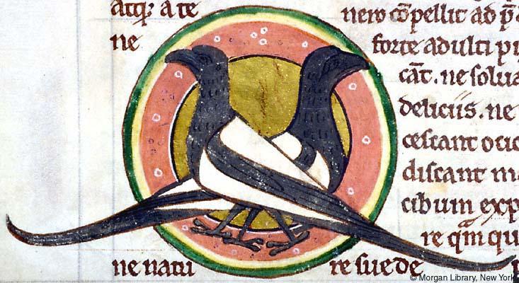 Morgan Library, MS M.81, Folio 53v, magpies.