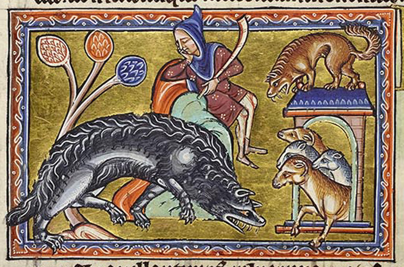 The wolf approaches a sheepfold like a dog, stealthily and silently, without waking the shepherd. His eyes shine at night like lamps.