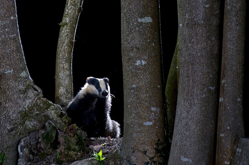 Richard Packwood's winning entry in the British Wildlife Photography Awards.