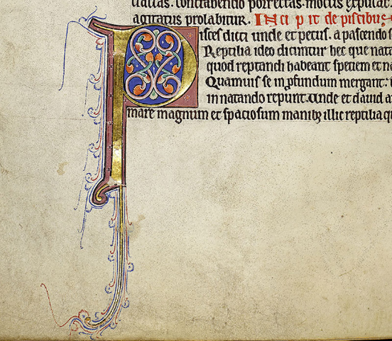 Major initial 'P', type 3, marks the start of fish. 'V' in margin is colour indicator for dark pink. A page is missing after f.72v which should contain the end of fish and the start of whale. The Ashmole Bestiary has a fine picture of a whale in this location (f. 86v).