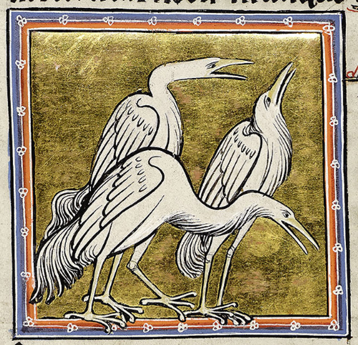 A portrait of three herons, the one on the right holding an especially characteristic pose.