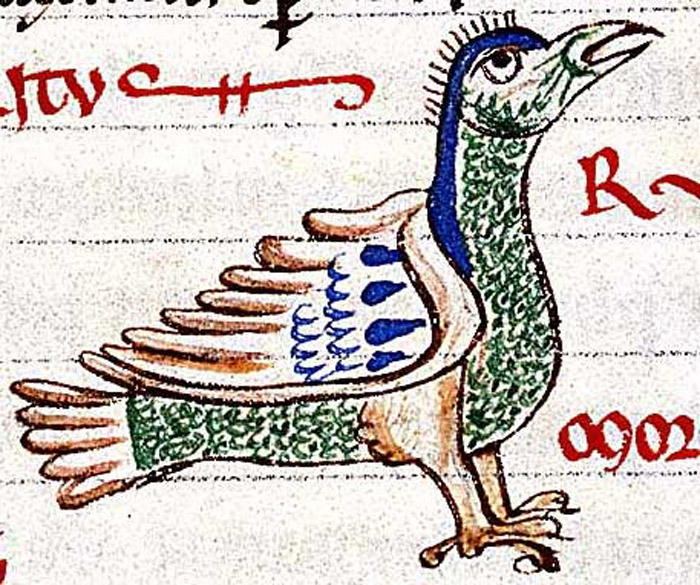 Bibliothèque Municipale de Troyes, MS 177, Folio 154v. A multi-colored jay with a crest on its head.