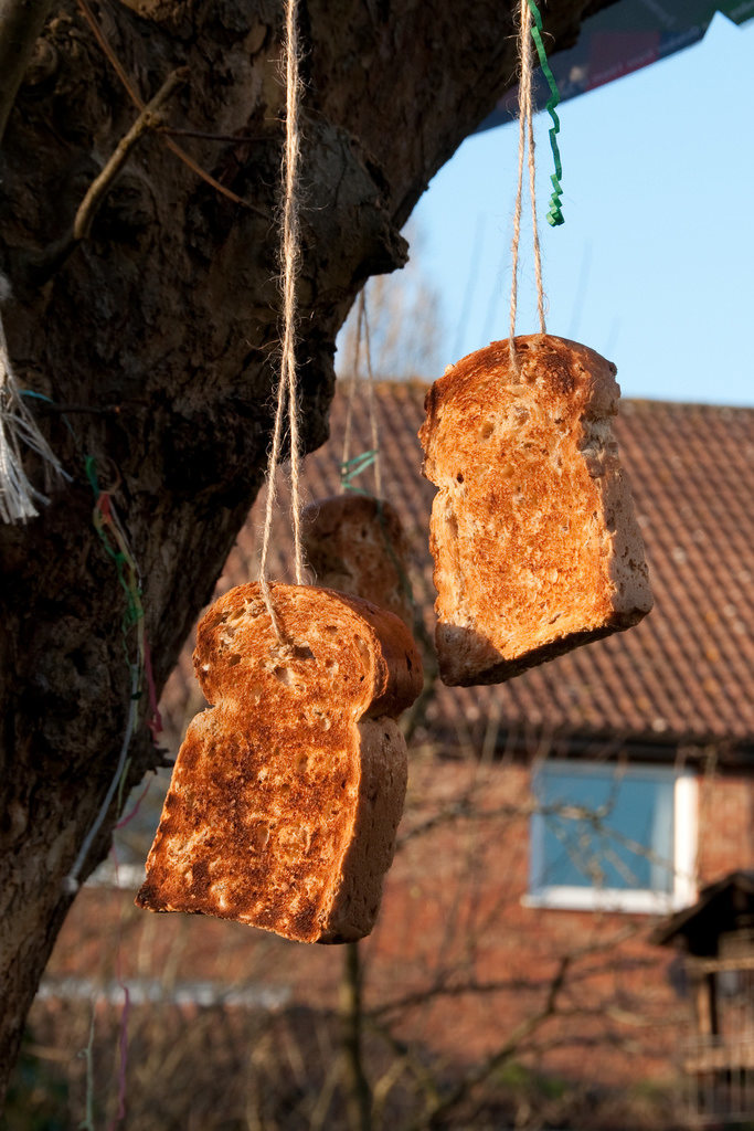 Toast swinging from an apple tree. Richard Gillin/(CC BY-SA 2.0)