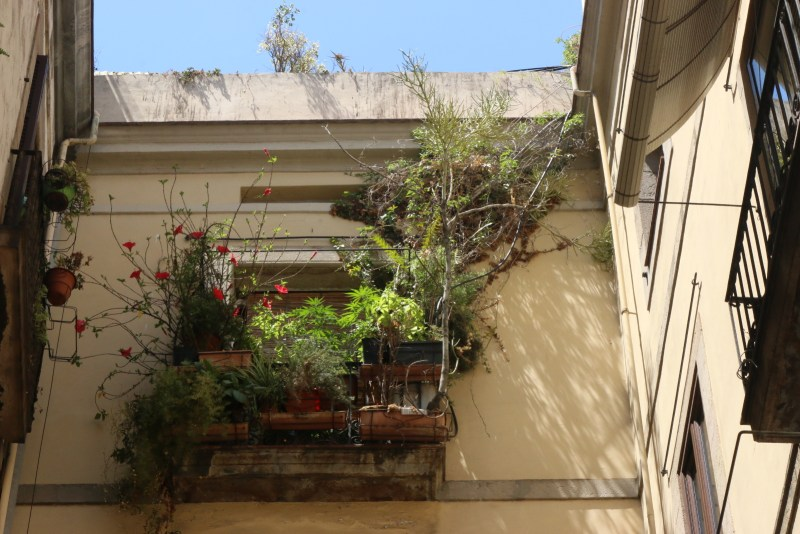A balcony with overgrowing plants