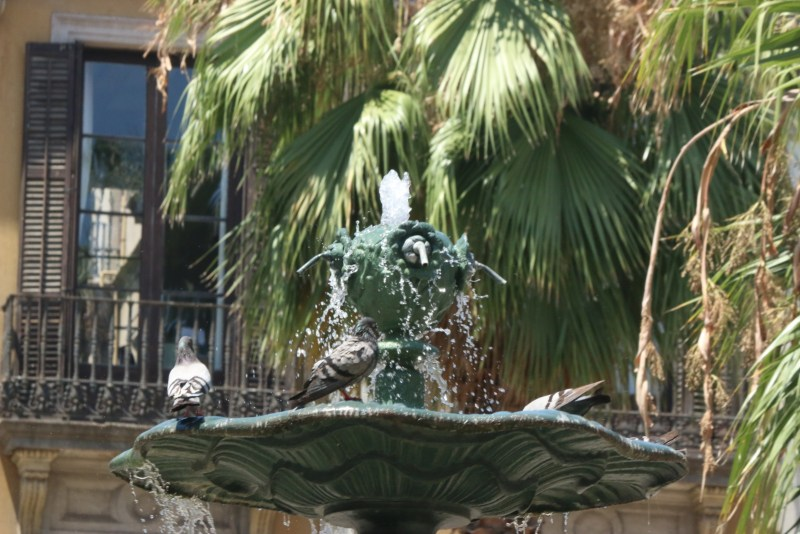 Pigeons bathing in a fountain.