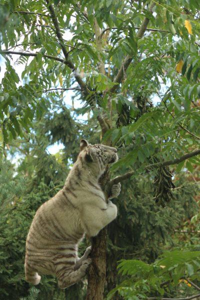 cub climbing