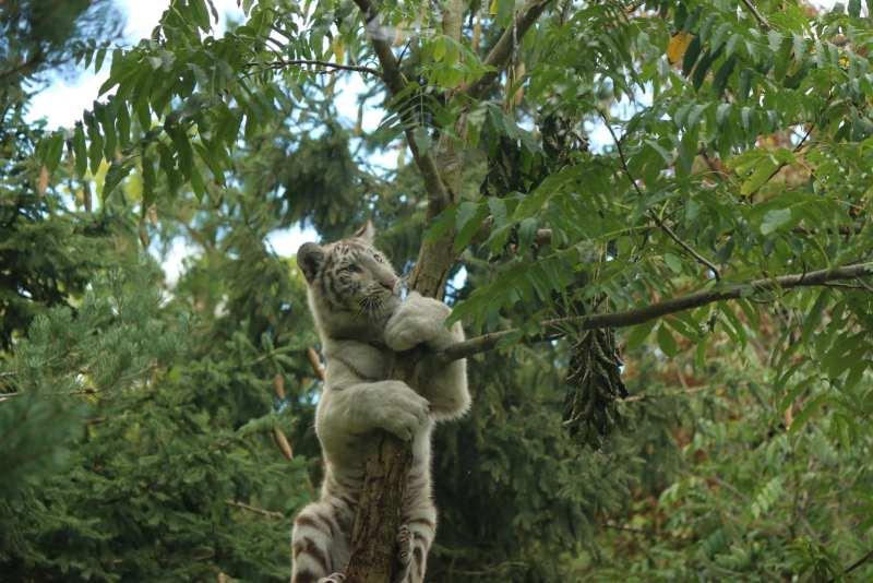 cub in tree