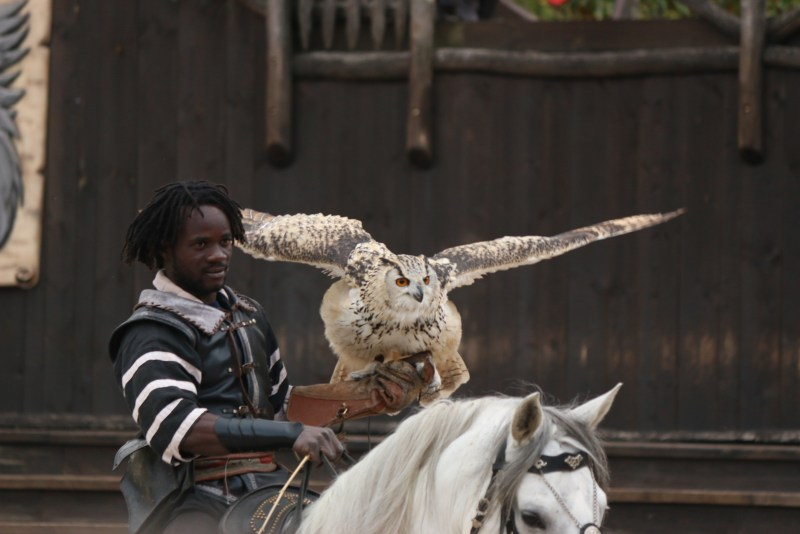 man on horse with owl