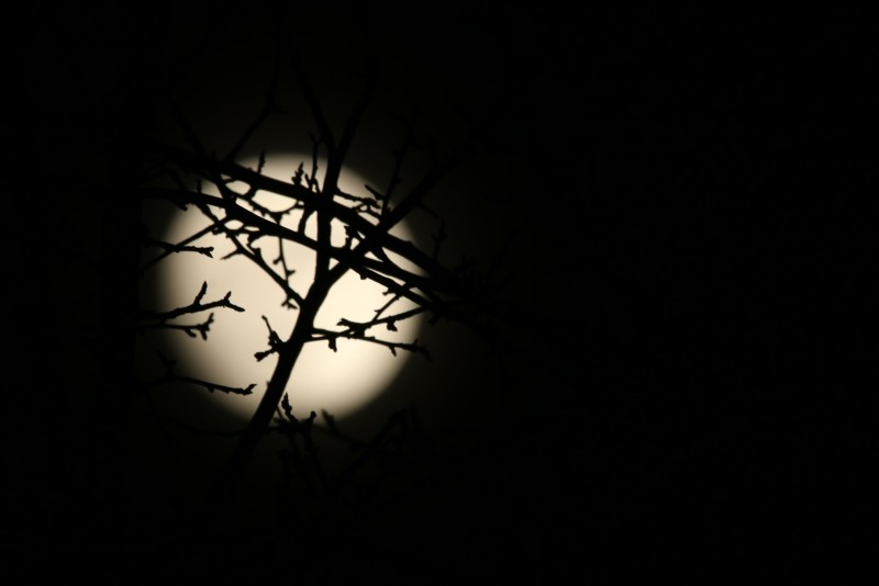 full moon behind trees