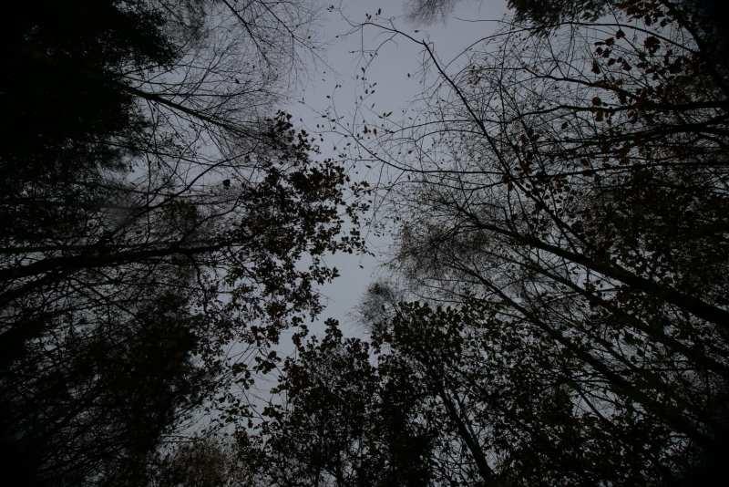 Tree crowns