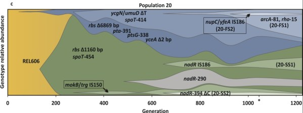 Figure 2 from Herron and Doebeli 2013. Muller plot showing E. coli evolution over 1200 generations.