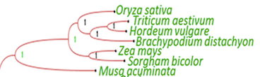Figure 7 detail