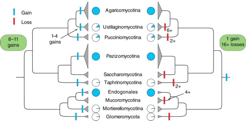 Nagy et al. 2018 Fig. 5