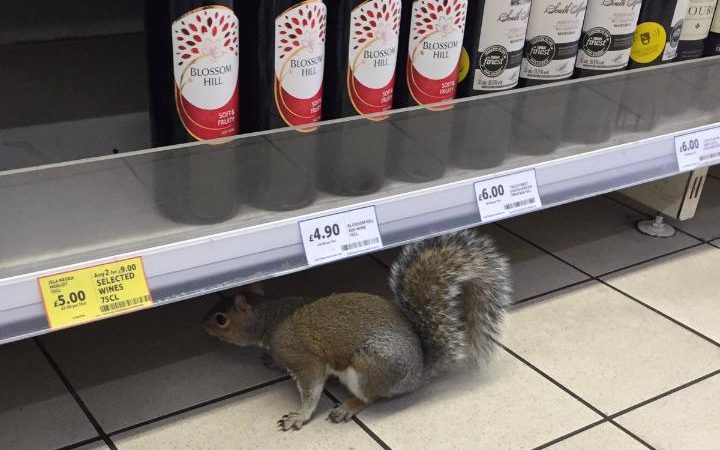 squirrelassassintesco