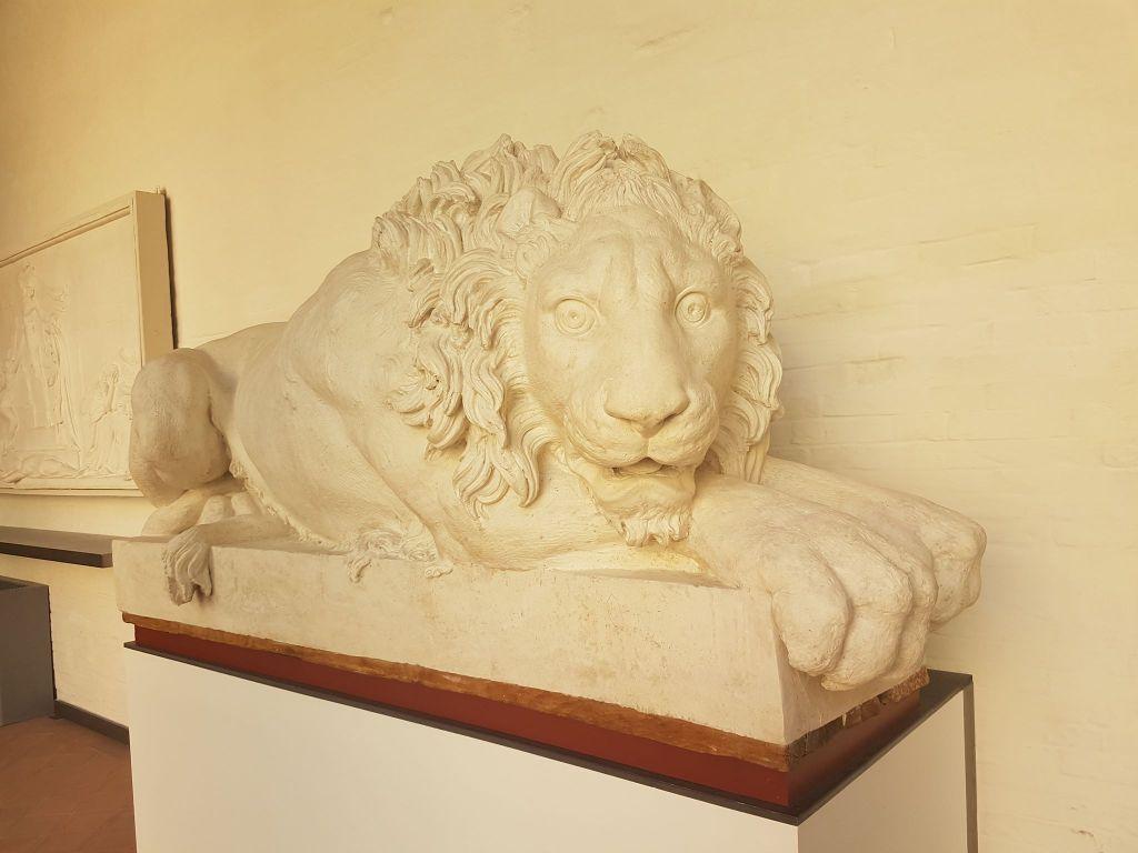 Bewildered lion
