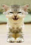 angry-kitty