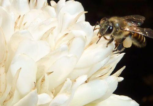 bee-coffee