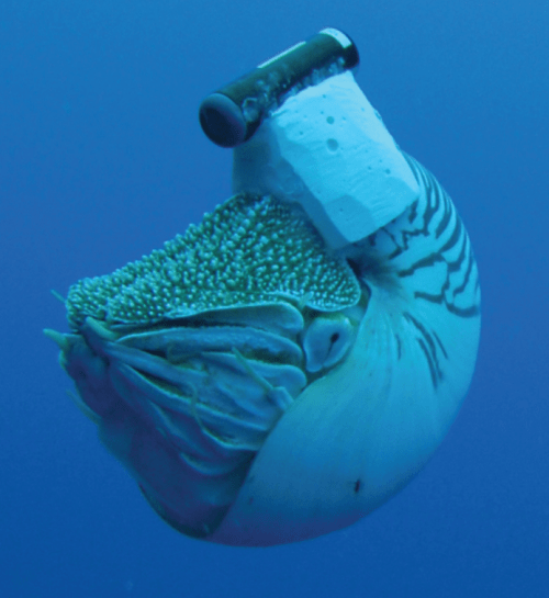 nautilus-with-transducer