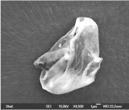 """A collapsed balloon-like biological entity sampled from the stratosphere. Note the """"proboscis"""" to the left,  with nose-like openings and the """"sphincter"""" present at the top of the organism"""
