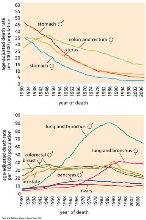 Charts of cancer death rates over time