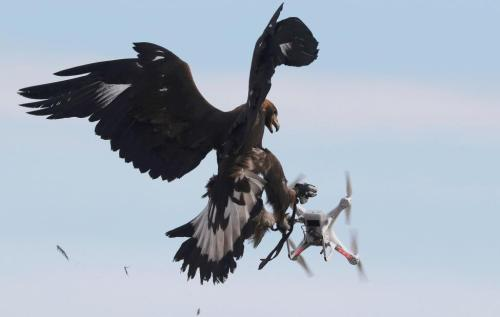 A golden eagle grabs a flying drone during a military training exercise at Mont-de-Marsan French Air Force base, Southwestern France, February 10, 2017. REUTERS/Regis Duvignau