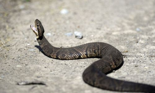 snakeroad