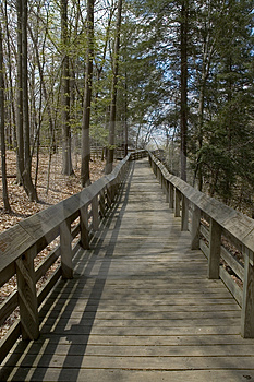 Stock Image - Forest Boardwalk