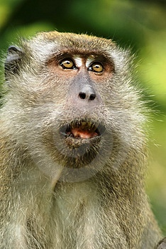 Stock Photo - Frightened monkey expression