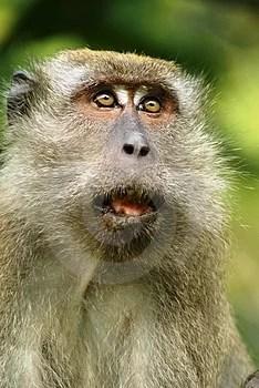 Stock Photo - Frightened monkey expression