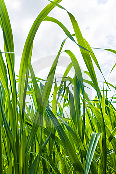 Stock Photo - Grass