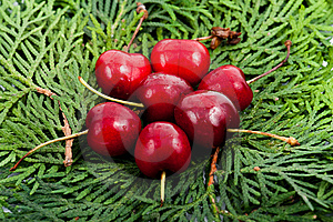 Stock Photography - Cherry on the leaf