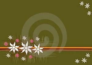 Stock Photography - Australian Flowers Background