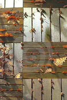 Free Stock Photos - Leaves of oak