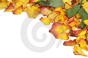 Stock Photography - Withered rose petals