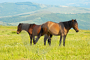 Stock Images - Couple of horces grazing